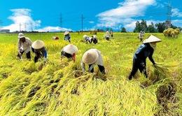 Nhiều nỗi niềm nông dân gửi Thủ tướng