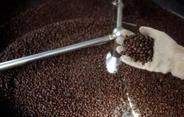 Tương lai bất định của thị trường cà phê thế giới