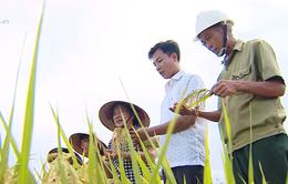 Quê lúa Thái Bình khát vọng trở thành tỉnh giàu mạnh của khu vực miền Bắc
