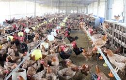 Đối xử nhân đạo với vật nuôi, ngành chăn nuôi phấn đấu vào nhóm tiên tiến vào năm 2030
