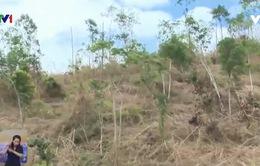 Bất an mùa mưa lũ ở nơi phá rừng làm rẫy
