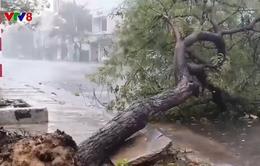 Mưa to và gió lớn tại Phú Yên