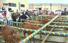 Trao tặng bò cho bà con nông dân khôi phục sản xuất tại Hà Tĩnh