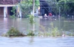 Lũ lụt bao vây, cuộc sống người dân vẫn được đảm bảo