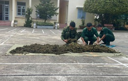 Thu giữ 12kg cần sa vận chuyển trái phép từ Campuchia vào Việt Nam