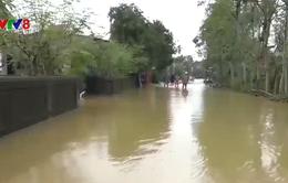 Quảng Trị: Hàng ngàn hộ dân vùng trũng ngập lụt trở lại