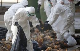 Nông dân châu Âu khốn đốn vì cúm gia cầm