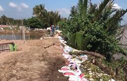 Nhiều đoạn đê bao bị vỡ do triều cường, hàng chục nghìn ha lúa và hoa màu ngập úng
