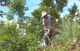Đắk Lắk: Phát triển nông nghiệp gắn với du lịch sinh thái