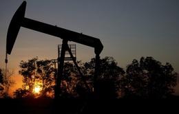 OPEC+ xem xét khả năng hoãn kế hoạch tăng sản lượng dầu