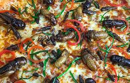 Dân mạng buôn gì: Pizza côn trùng hay món quà đặc biệt cho người giàu?