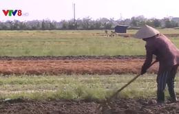 Hỗ trợ người dân Thừa Thiên - Huế sản xuất sau lũ