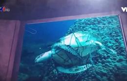 Những mối đe dọa đối với rùa biển Côn Đảo