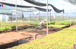 Gia Lai: Giải quyết việc làm cho lao động nông thôn