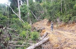 Hàng loạt dự án xin xén rừng tự nhiên