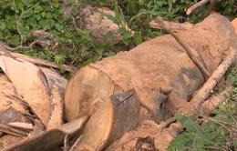Rầm rộ nạn phá rừng tự nhiên, chiếm đất ở Khánh Hòa