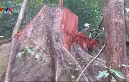 Phát hiện vụ phá rừng quy mô lớn ở Quảng Ngãi