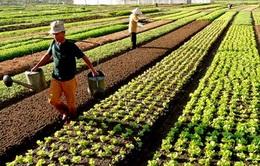 Tái cơ cấu theo 3 trục sản phẩm: Đưa sản xuất nông nghiệp phát triển lên tầm cao mới