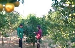 Người nông dân đạt huân chương lao động hạng III