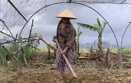 Nông dân vật vã với mùa sản xuất Tết