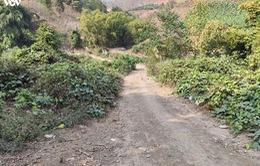 Lỗ hổng trong giám sát rừng cộng đồng