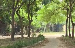 """""""Dự án ma"""" tại Hà Nội: Công ty môi giới nhận tỷ lệ hoa hồng """"khủng"""""""
