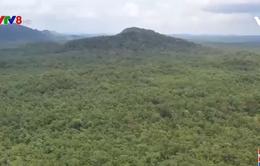Đắk Lắk: Đẩy mạnh phát triển và bảo vệ rừng