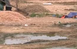 Khánh Hòa: Cơ sở sơ chế đầu, vỏ tôm gây ô nhiễm nghiêm trọng