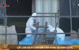 Lây lan dịch cúm gia cầm H5N8 tại Hàn Quốc