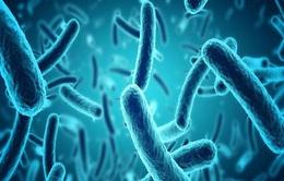 Xác định độc tố cho thấy khuẩn E.coli gây tiêu chảy kéo dài