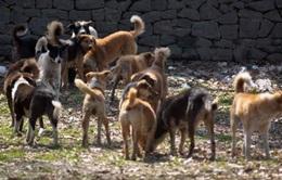 Cách ly toàn bộ chó, mèo của 1 huyện trong 14 ngày phòng bệnh dại