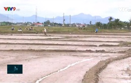 Liên kết sản xuất lúa giống- hướng gỡ khó cho nông dân vùng thiên tai