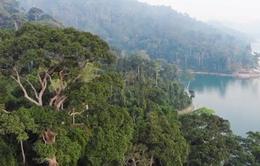Gấp rút thành lập Vườn Quốc gia Sông Thanh