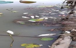 Bình Thuận: Đã xác định nguyên nhân cá đồng chết hàng loạt