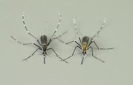 Tìm hiểu cách muỗi đánh hơi loài người có thể giảm hàng nghìn ca tử vong