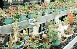 Lạ mắt với bộ sưu tập tiểu cảnh, bonsai mini đạt kỷ lục thế giới