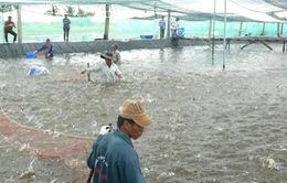Nhiều động lực để ngành tôm Việt bứt phá