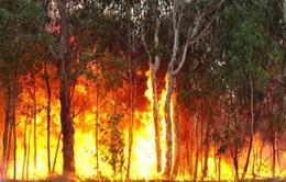 Miền Bắc hanh khô kéo dài, chỉ sơ ý nhỏ có thể gây ra đám cháy lớn