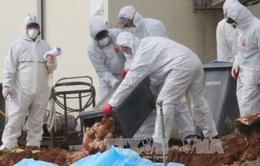 Hàn Quốc xác nhận ca thứ 6 mắc cúm gia cầm độc lực cao