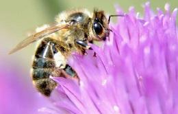 Nửa triệu loài côn trùng có nguy cơ tuyệt chủng