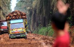 Indonesia dùng thử nghiệm nhiên liệu diesel sinh học 40%
