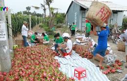 Bình tĩnh tìm giải pháp tiêu thụ nông sản bền vững