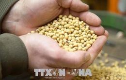 Giá nông sản tăng trở lại