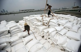 Thái Lan lo mất ngôi nước xuất khẩu gạo lớn thứ 2 thế giới vào tay Việt Nam