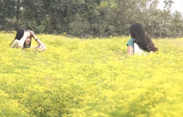 Cánh đồng hoa giữa vùng hạn