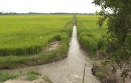 Kiên Giang công bố tình trạng hạn hán xâm nhập mặn