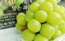 Việt Nam trở thành thị trường nhập khẩu nho lớn nhất của Hàn Quốc
