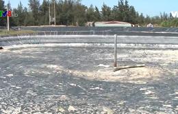 Quảng Nam kiểm soát nuôi tôm trên cát