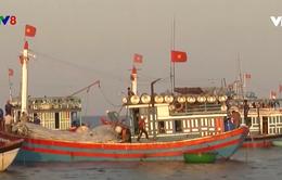 Ngư dân Lý Sơn nói không với đánh bắt hải sản trái pháp luật