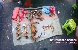 Trung Quốc soạn luật chống tiêu thụ động vật hoang dã